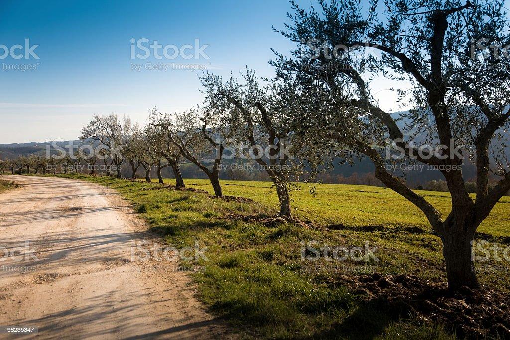 Paesaggio di primavera foto stock royalty-free