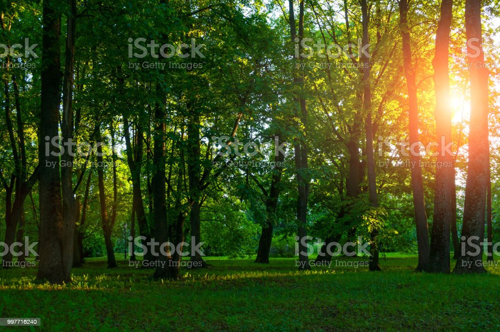 Spring landscape, spring park in sunny weather at sunset stock photo