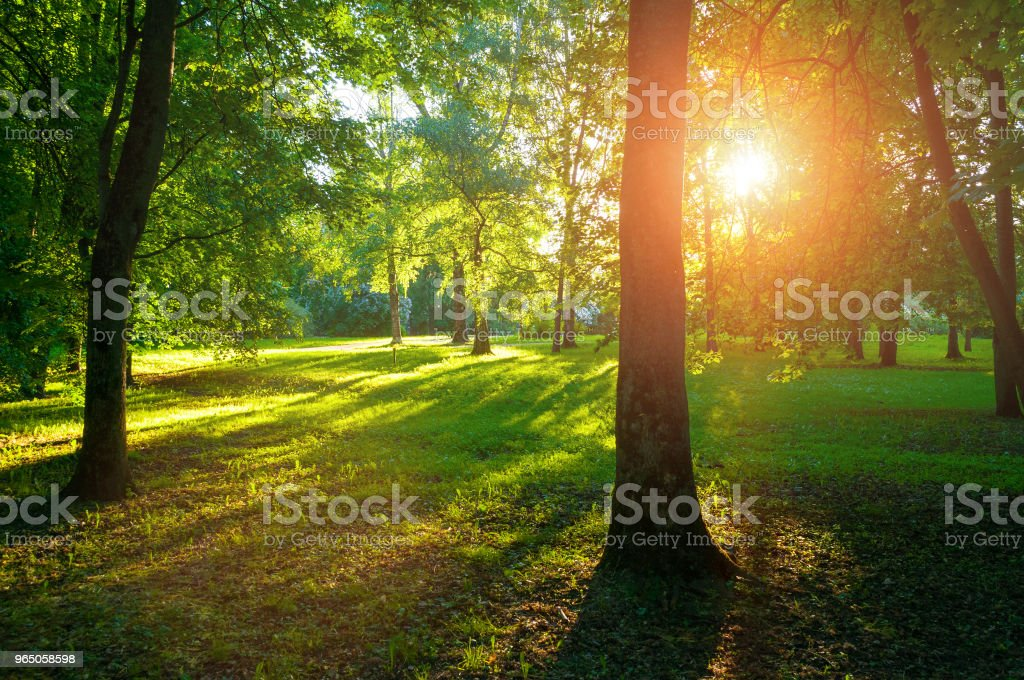 Spring landscape -spring park trees and sunset light royalty-free stock photo