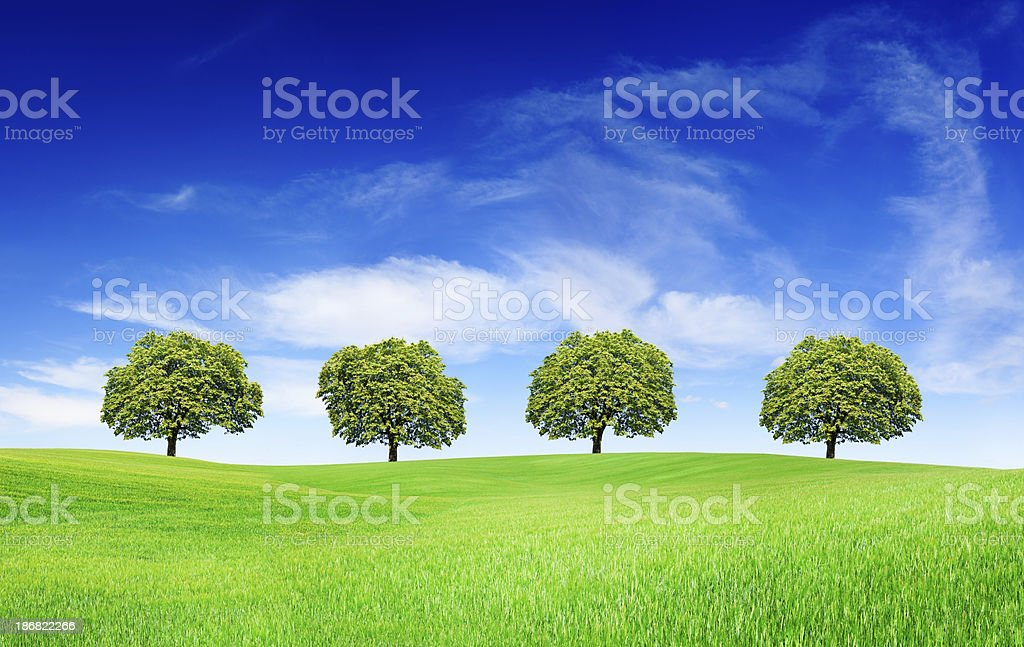 Spring landscape - Trees on green field royalty-free stock photo
