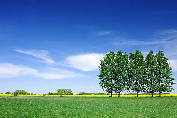 Frühling Landschaft-Bäume auf grünen Feld der blauen Himmel – Foto
