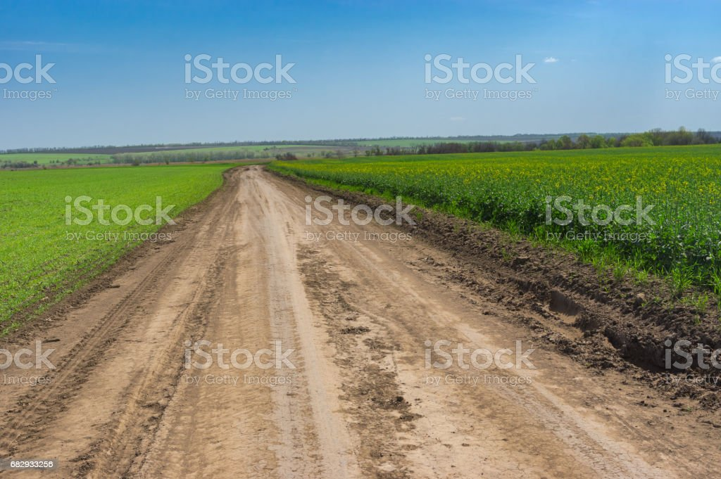 Spring landscape with an earth road between wheat and rape agricultural fields royalty-free stock photo
