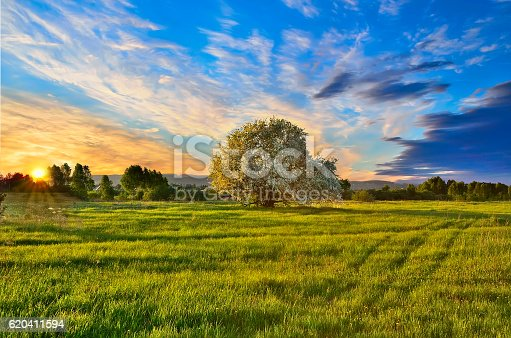 Spring landscape with blooming apple tree on the meadow at sunset. Stunning inspirational sunset image with glowing sun beams