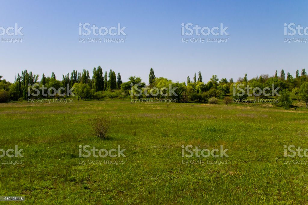 Spring landscape with green meadow and trees royalty-free stock photo