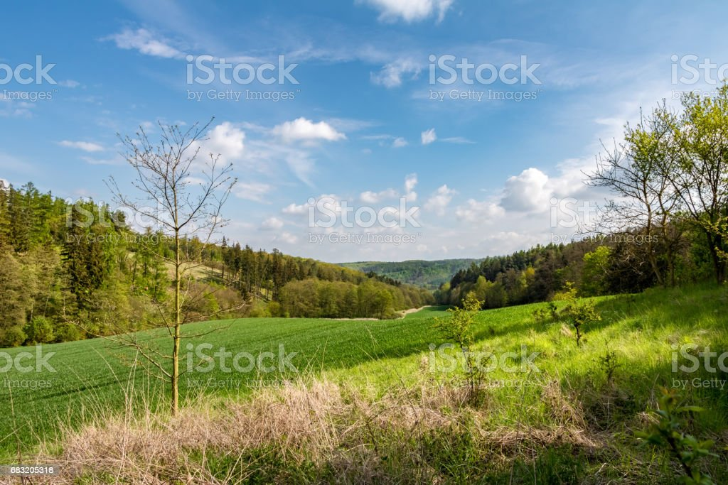 Spring landscape with green meadow, forest and blue sky 免版稅 stock photo