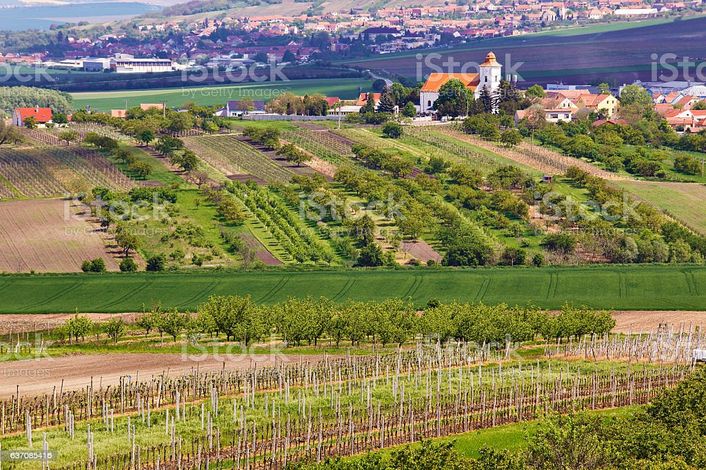 Spring landscape with green vineyards and town at background. Gr stock photo