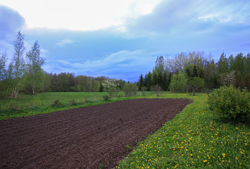 Spring landscape with plowed field and blooming dandelions.