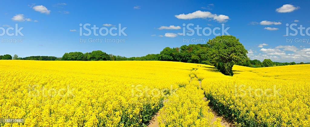 Frühling Landschaft mit verschlungenen Dusty Farm Road durch Canola-Felder – Foto