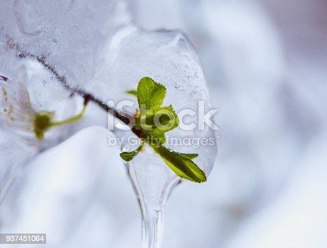 639394370istockphoto Spring leaf captured in ice 937451064