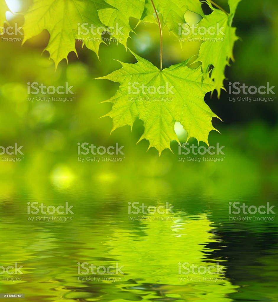 Spring leaf stock photo