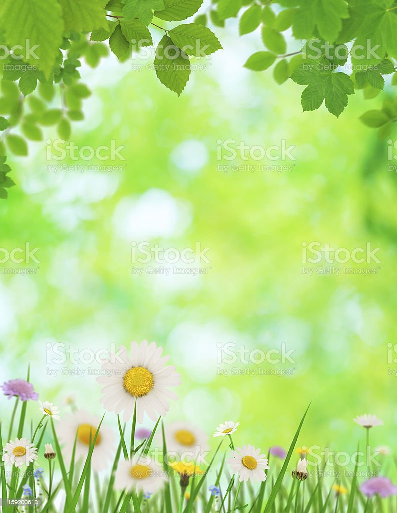 Spring Leaves And Flowers royalty-free stock photo