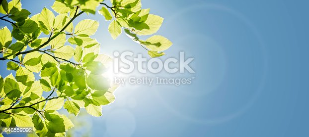 Spring leaves background with sunlight and blue sky for copy space