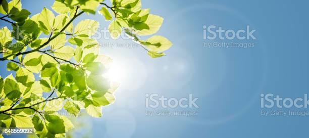 Spring leaves background picture id646559092?b=1&k=6&m=646559092&s=612x612&h=ufsqrzzxy0qmu9ubadkxmp qfjhiky1xk8zcdj4sh a=