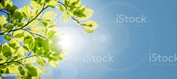Photo of Spring leaves background