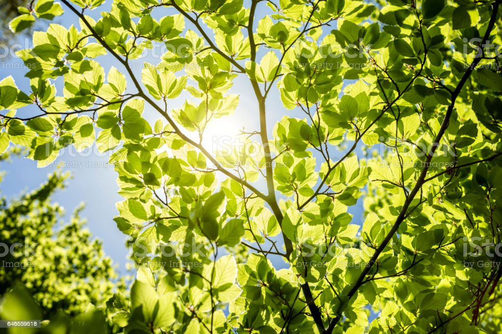 Spring leaves background stock photo
