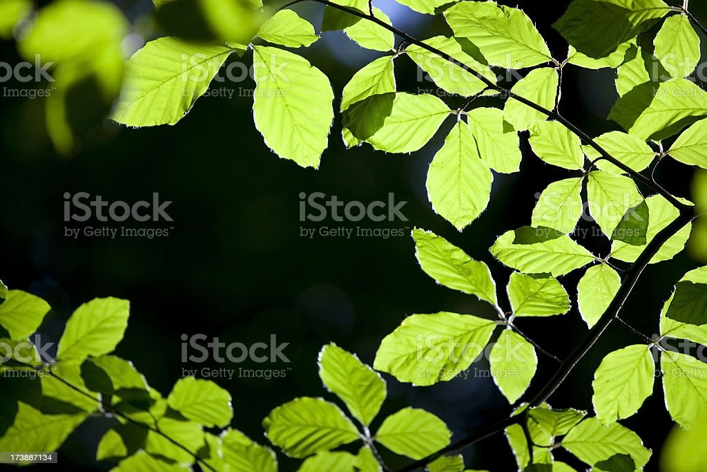 Spring leaves frame royalty-free stock photo