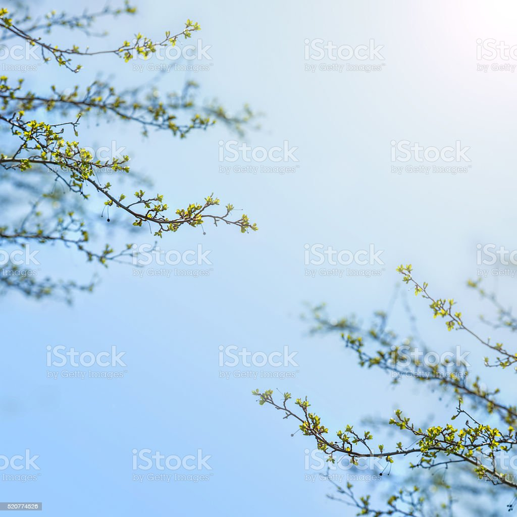 Spring leaves on branches stock photo