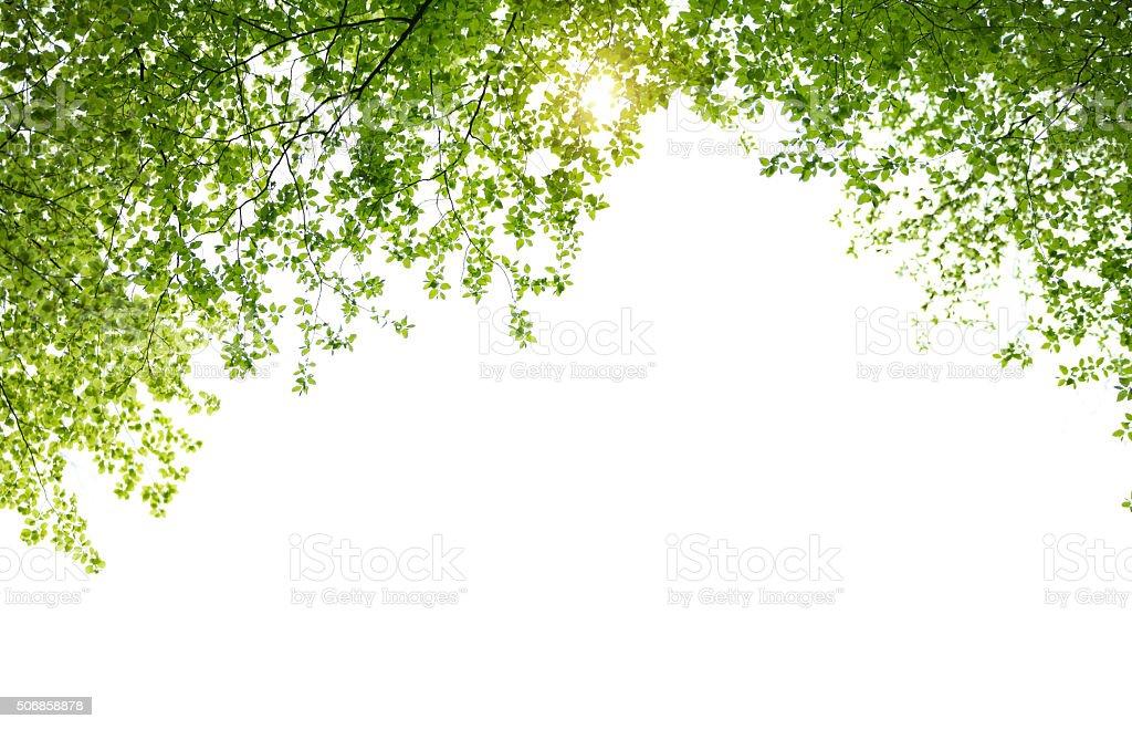 Printemps de feuilles sur fond blanc - Photo