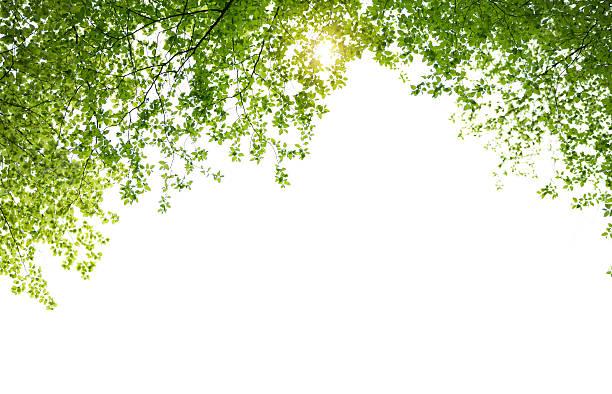 Frühling lässt auf weißem Hintergrund – Foto