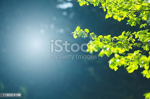 Green leaves in a forest.