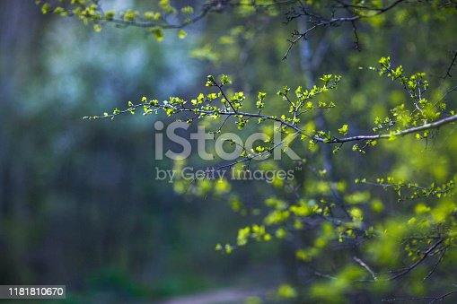 istock Spring Leaves 1181810670