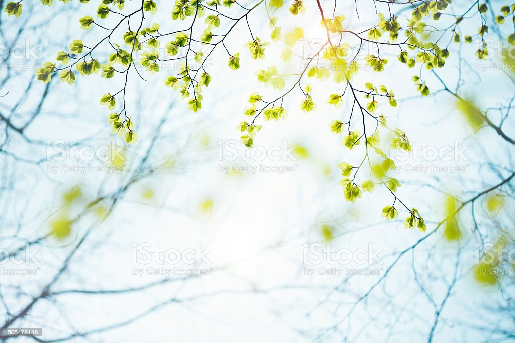 Feuilles de printemps - Photo