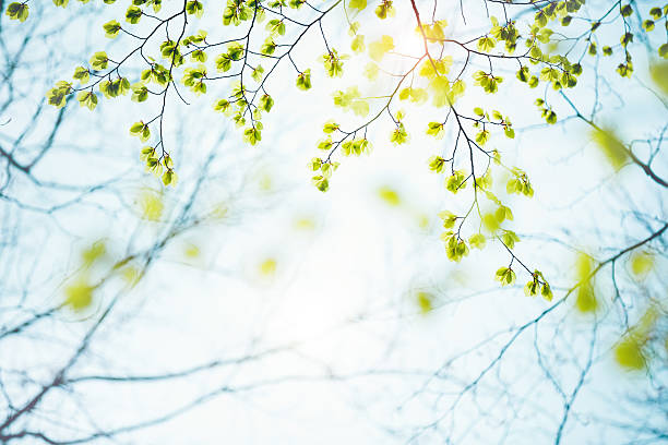 spring leaves - spring stock pictures, royalty-free photos & images