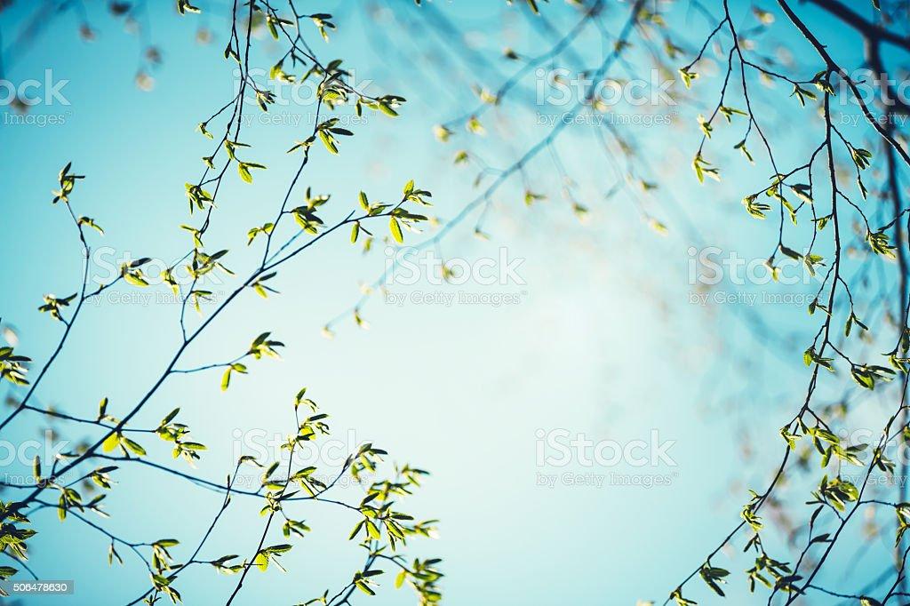 Feuilles de printemps - Photo