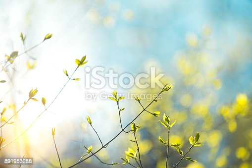 istock Spring Leaves 891953288