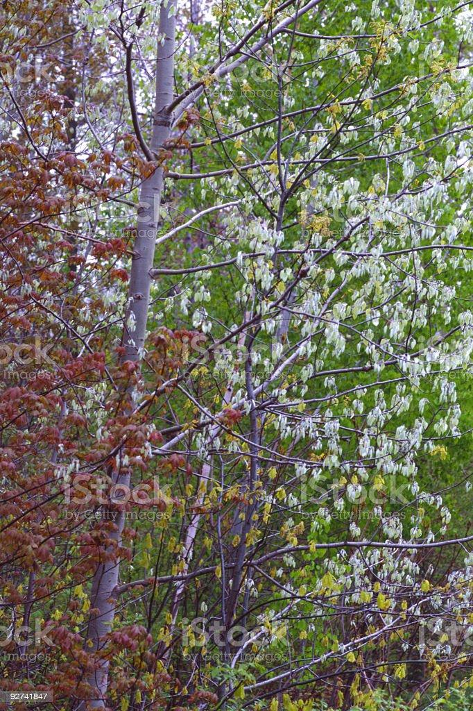 Frühling-Blätter Lizenzfreies stock-foto