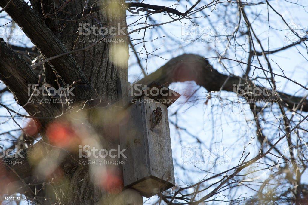 Spring little bird on a birdhouse. stock photo