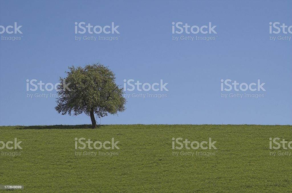 Spring lone tree (landscape) royalty-free stock photo
