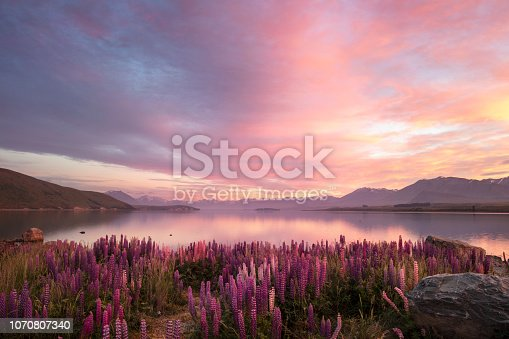 Lake Tekapo, on the South Island of New Zealand. A colorful sunrise matches the multiple colors of the lupines that grow wild around the lake in the spring (November/December in New Zealand). The distant mountains and sky are reflected in the still waters of the lake. Note: some fine noise is visible at 100%.