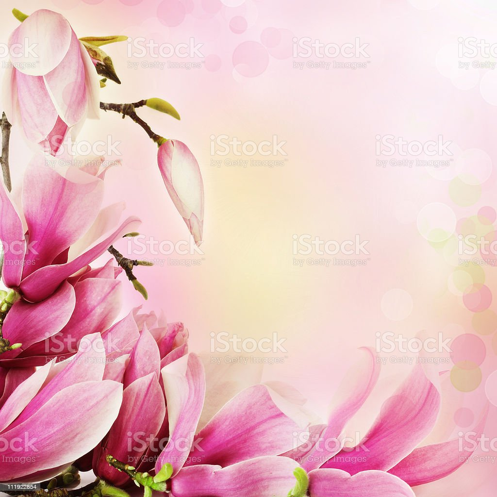 Spring magnolia flowers border royalty-free stock photo