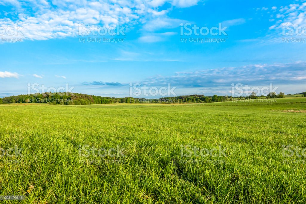 Spring meadow and blue sky over grass field, countryside landscape stock photo