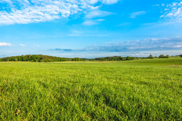 spring meadow and blue sky over grass field, countryside landscape - meadow stock pictures, royalty-free photos & images