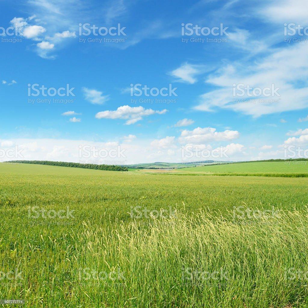 Bleu urbain la prairie