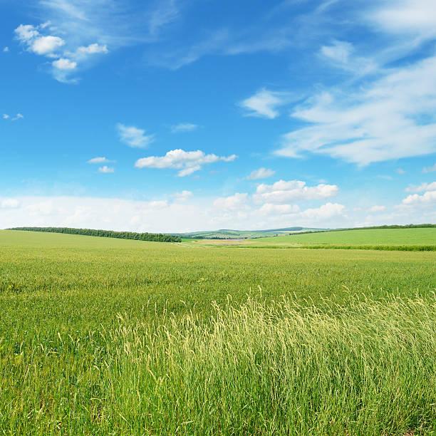 Printemps Prairie et ciel bleu - Photo