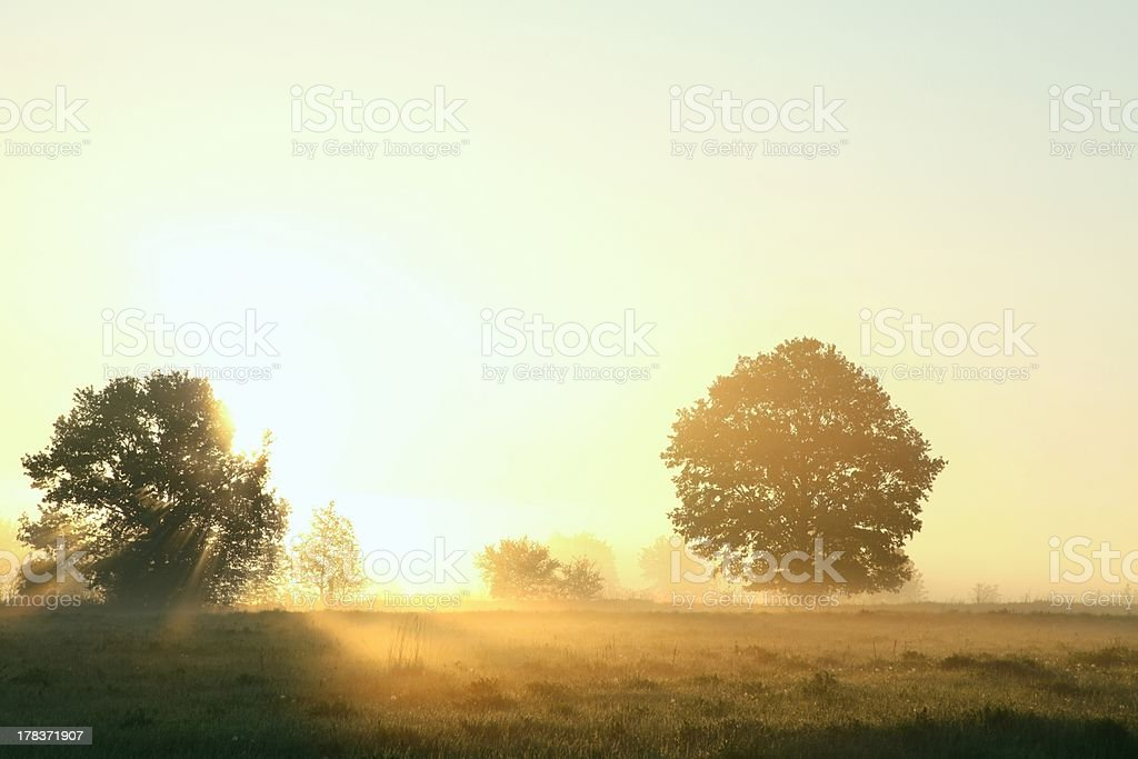 Spring meadow at dawn royalty-free stock photo