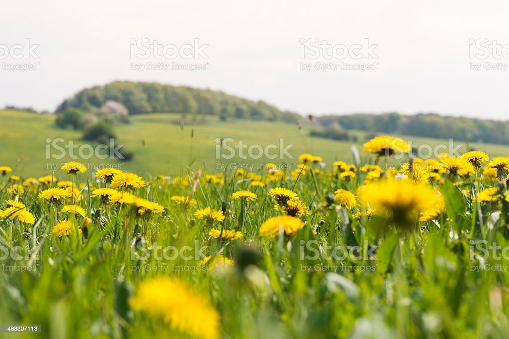 Spring meadow in Rhön Thuringia stock photo