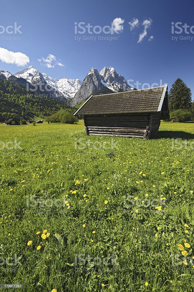 Spring Meadow in the Alps royalty-free stock photo
