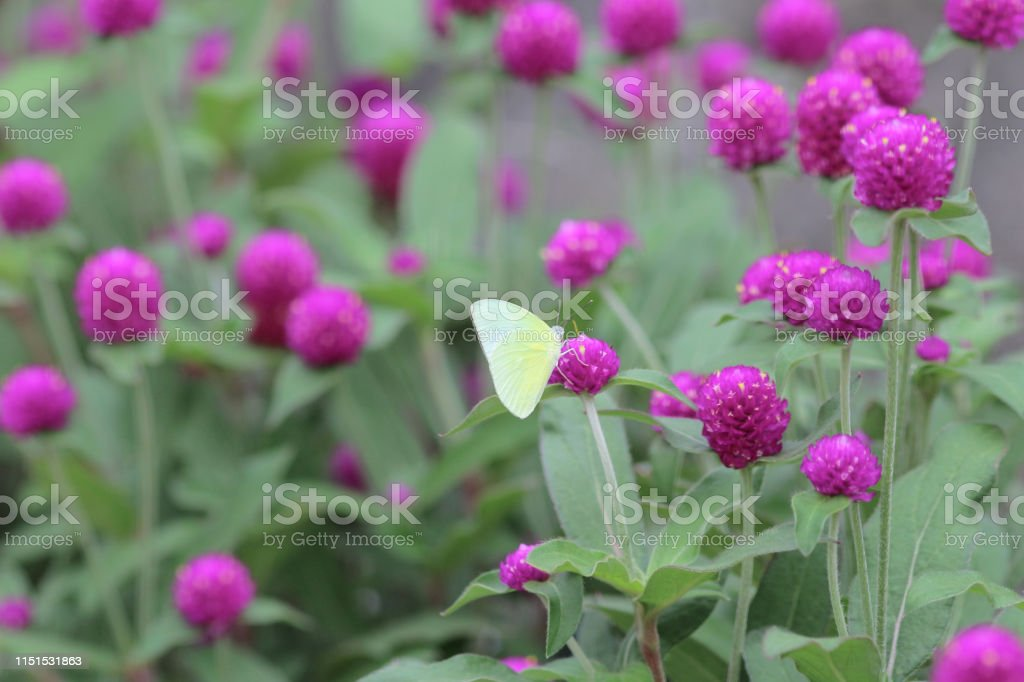 Spring meadow landscape. a Pink spring flowers