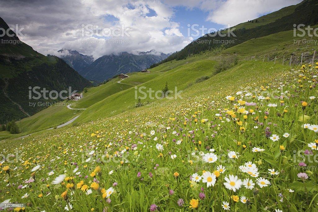 spring meadow near kaisers royalty-free stock photo