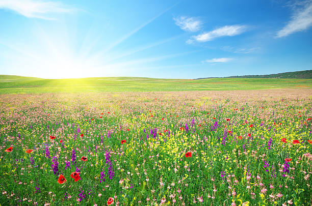 spring meadow of flowers - meadow stock pictures, royalty-free photos & images