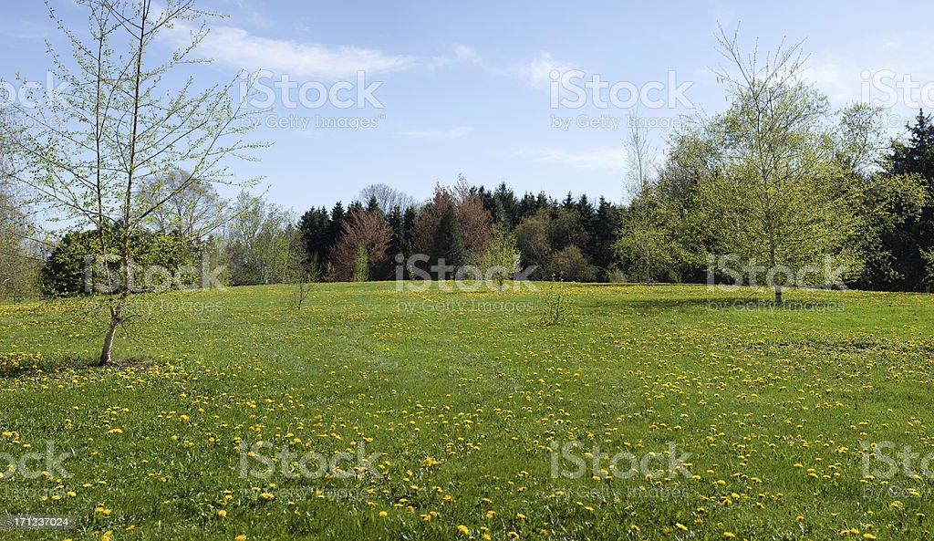 Spring Meadow Panoramic background royalty-free stock photo