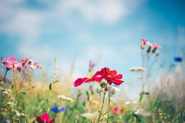 Frühlingswiese – Foto