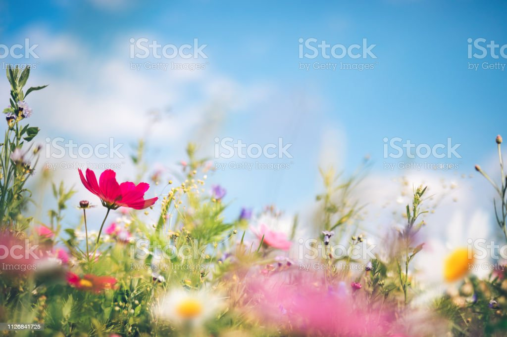Lente weide - Royalty-free Achtergrond - Thema Stockfoto