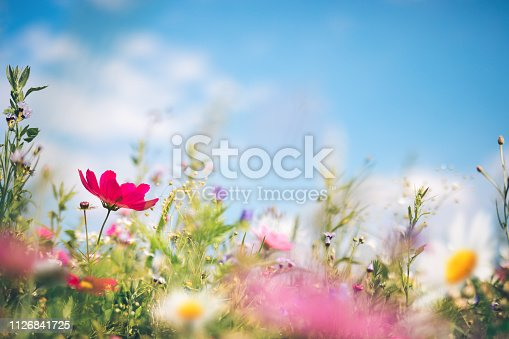 Spring meadow full of colorful flowers.