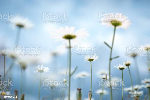 Spring meadow picture id1197996076?b=1&k=6&m=1197996076&s=612x612&h=zkrvvmffsnhj qasyl2mwolwo7fsxp7ro5ooqbtppz0=
