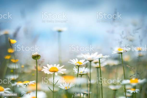Spring meadow picture id1199839585?b=1&k=6&m=1199839585&s=612x612&h=e499vnqohjkt3z7jn7a vaf0 z1fmu3 miisb87hcjg=